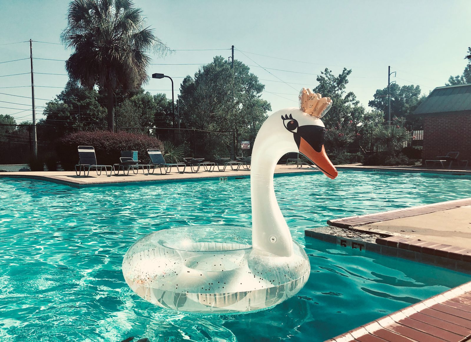 white swan floater on pool